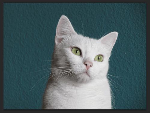 今回の素材は猫の写真