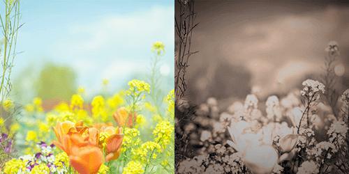フォトショップで写真をレトロ風・ビンテージ風・トイカメラ風に加工する作例
